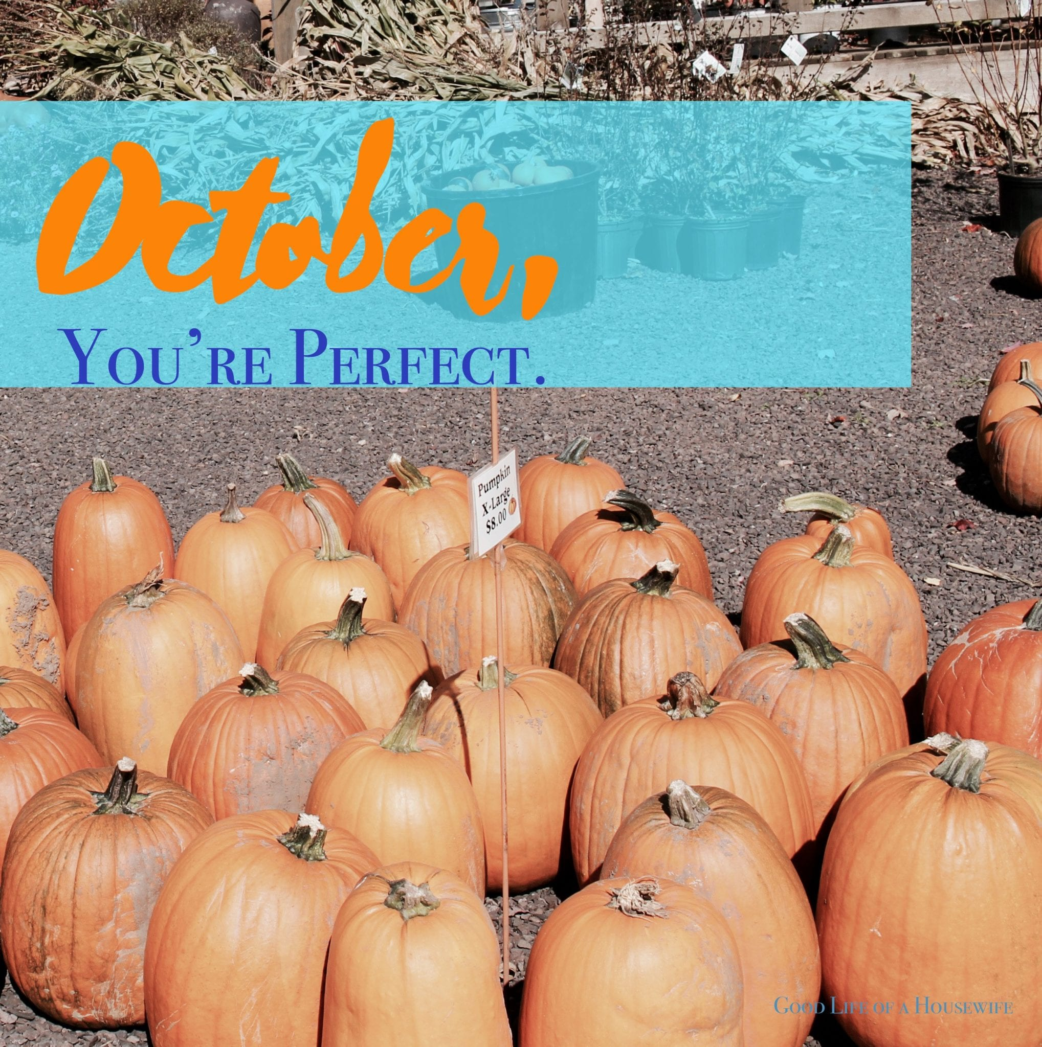 October, You're Perfect. www.goodlifeofahousewife.com