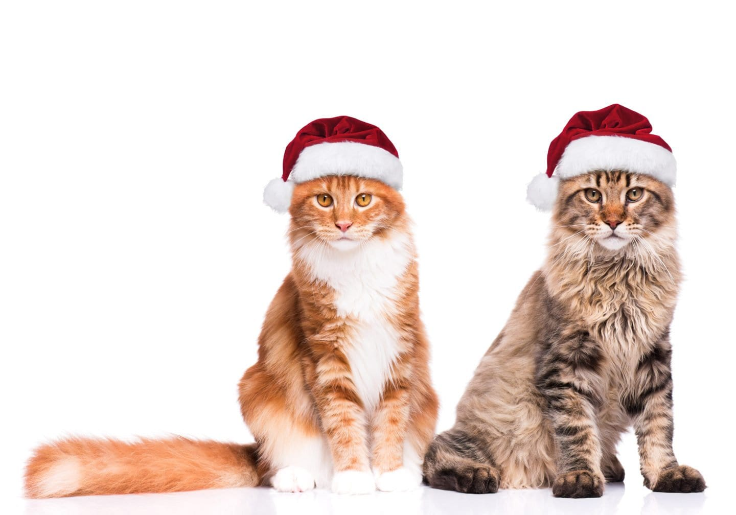 10 Stocking Stuffers for Cats