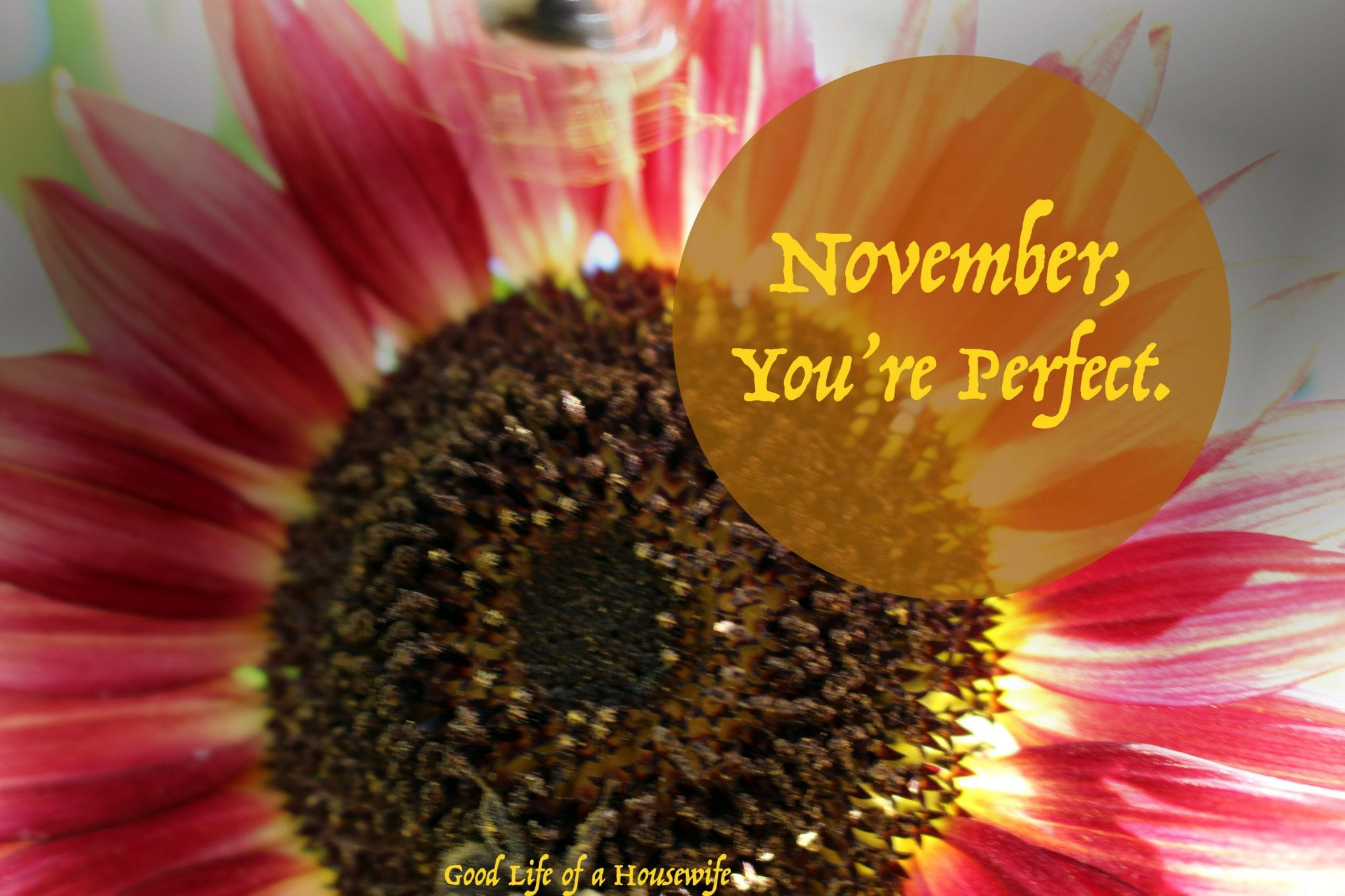 November, You're Perfect.