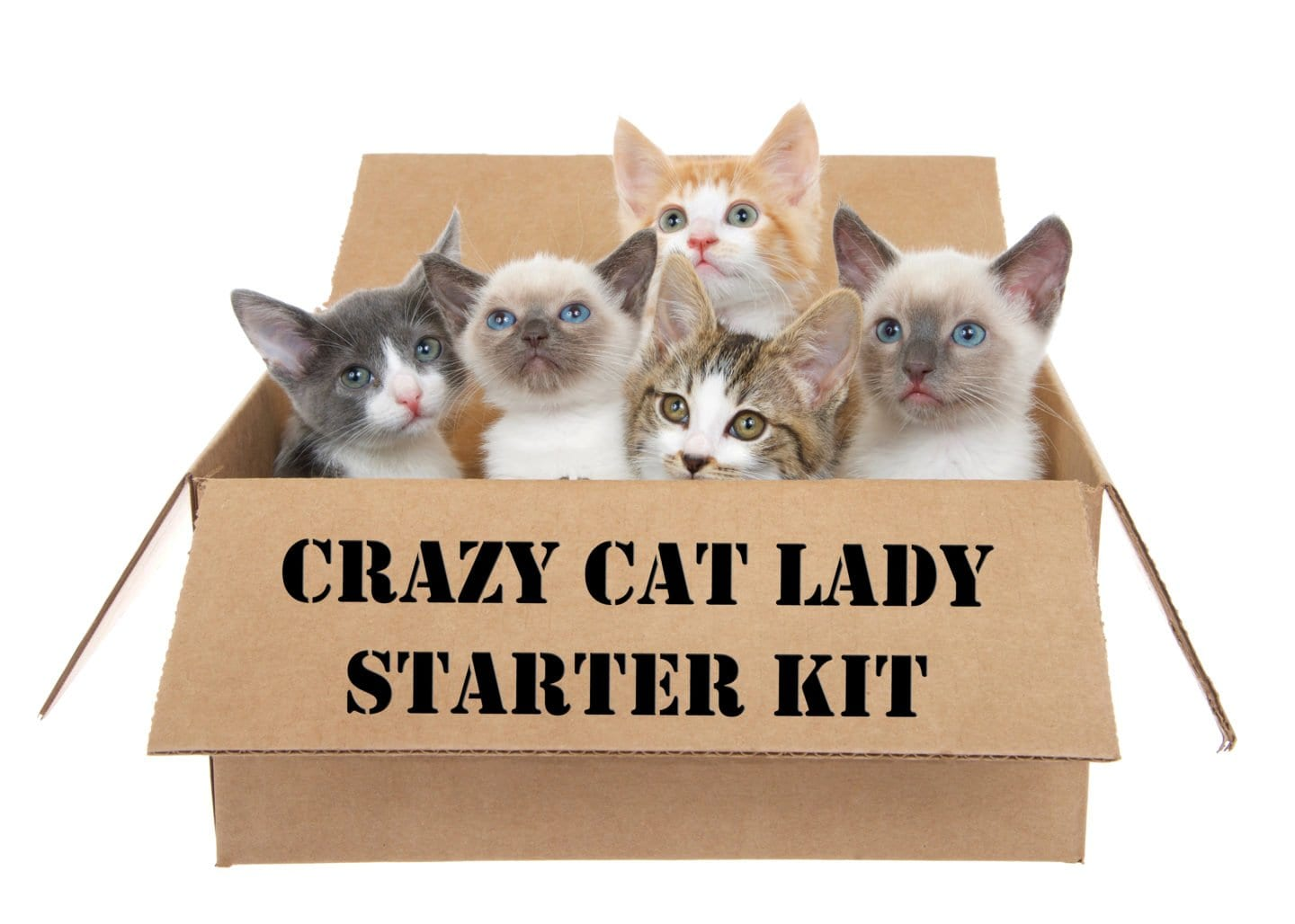 Gifts for the Crazy Cat Lady