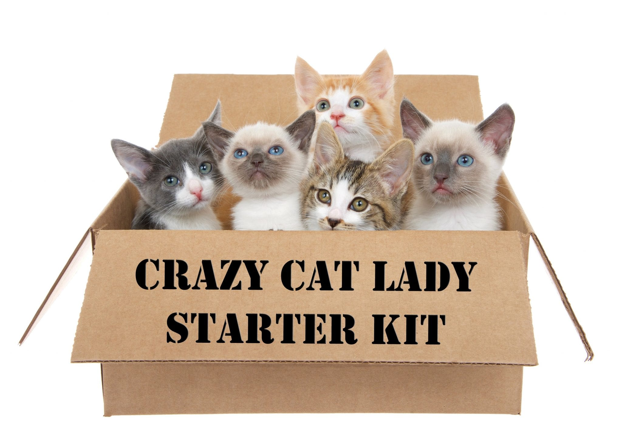 Stocking Stuffers & Gifts for the Crazy Cat Lady